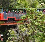 NZ_activite_driving_creek