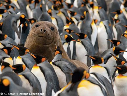 Séjours en Antarctique et dans les îles subantarctiques